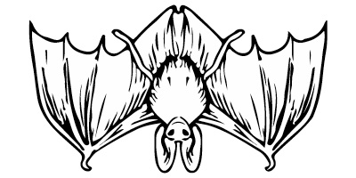 Fladdermus